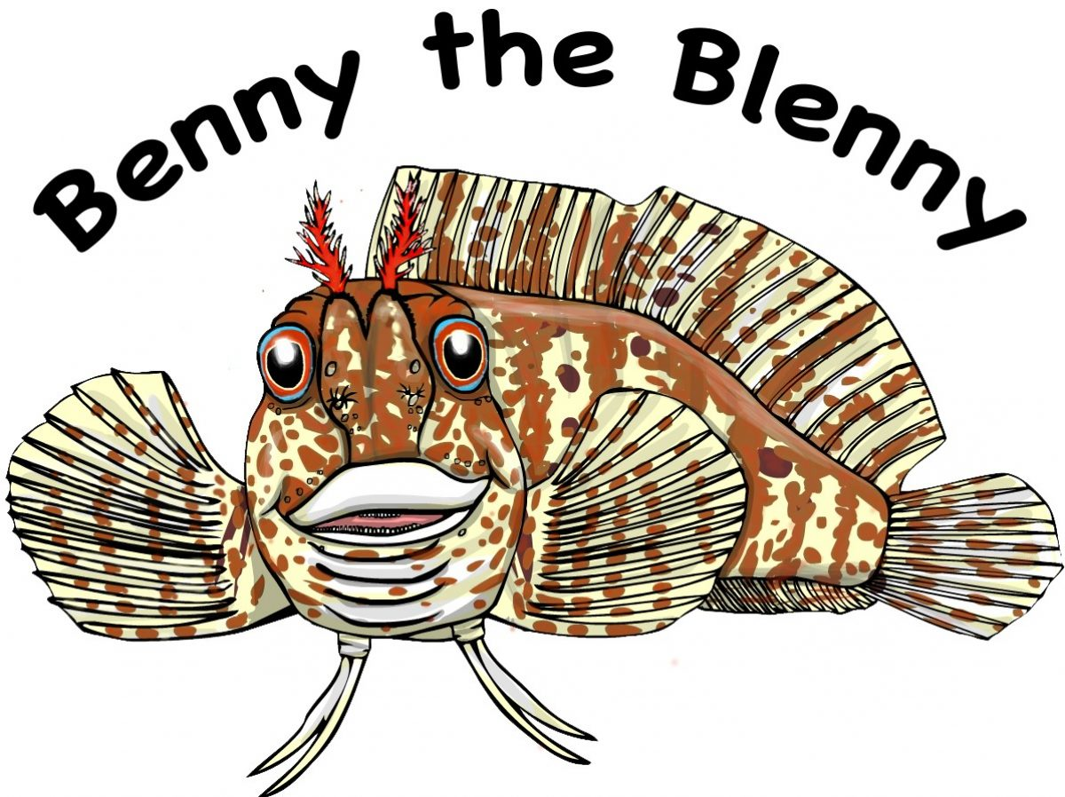 Benny the Blenny aka the 'fish with antlers'/The Christmas Tree Fish